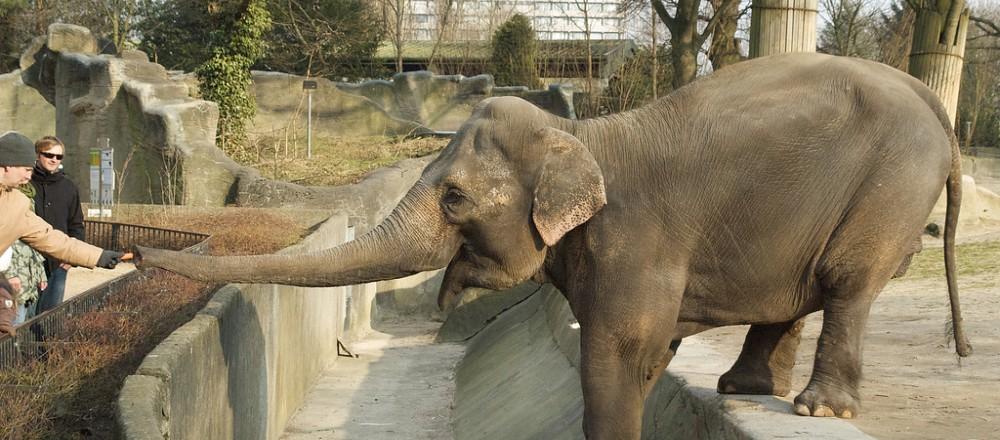 大象 动物 1000_440